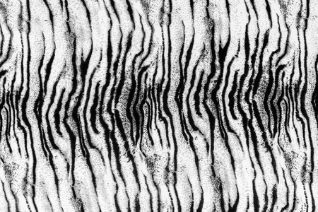 tiger skin: The fabric on striped tiger on background