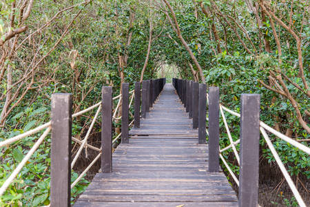 wooden bridge in mangrove forest rhizophora photo