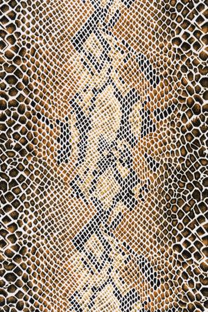 Beschaffenheit des Gewebes gestreiften Schlangenleder für Hintergrund Standard-Bild - 32607836