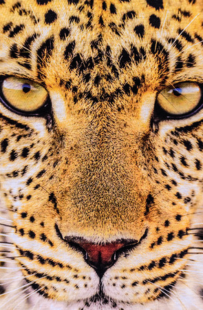 texture of print fabric stripes the tiger face for background photo