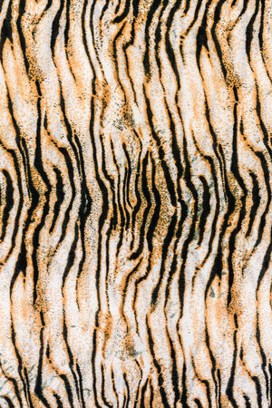 texture of close up print fabric striped tiger for background photo
