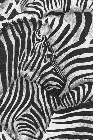 texture of print fabric striped zebra for background photo