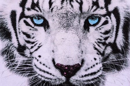 white fur: texture of print fabric striped the white tiger face for background Stock Photo