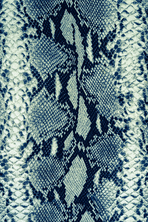 snake: texture of print fabric striped snake leather for background