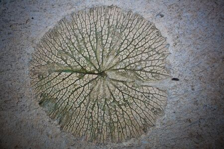 Water lily leaf stamp on concrete photo