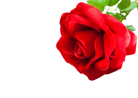 artificial red rose of love in the pocket white shirt Stock Photo