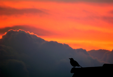 aciculum: Bird singing on a roof, behind is a nice background.
