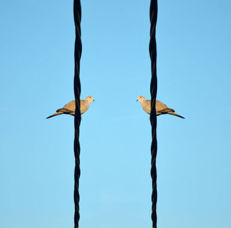 Two birds comunicating on a wire. photo
