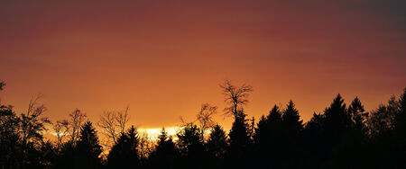 Mixed tree forest silhouette. Shot in low light. photo