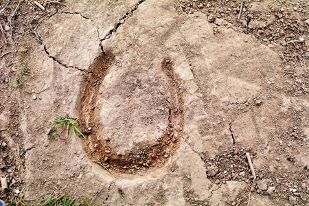 Farm animal track, and a luck symbol. photo