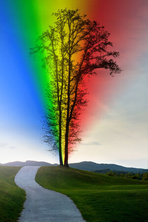 tree of life silhouette: Road leading to a lonely tree with a rainbow.