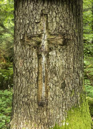 man made: Man made tree scar in a  cross shape. Stock Photo