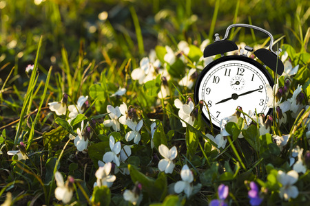 Alarm clock placed among the flowers representing the end of winter.
