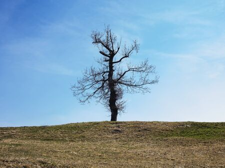 oxygene: Last standing tree on a hill. Stock Photo