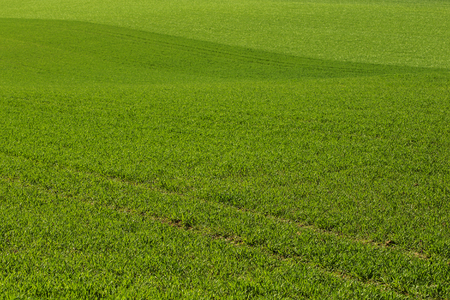 nice looking: Cultivated land with nice looking grass.