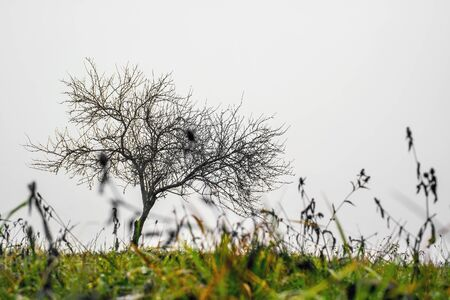 Small lonley tree without any leaves.