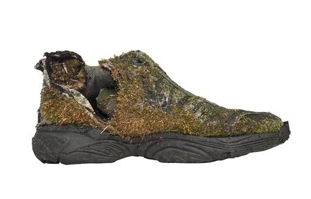 Old shoe covered with moss all over it.