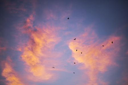 Group of birds are flying in a sunset time. Stock Photo