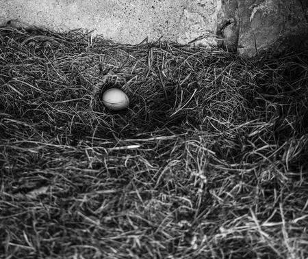 Layed egg by a chicken in a nest. Stok Fotoğraf