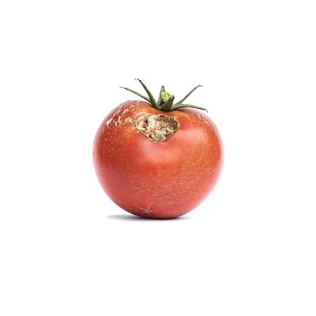 Tomato vegetable with a disease isolated on white.