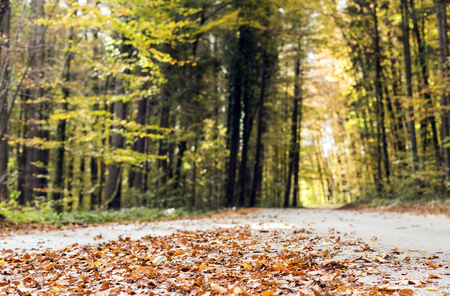 Road full of leaves from trees in autumn season. Stok Fotoğraf