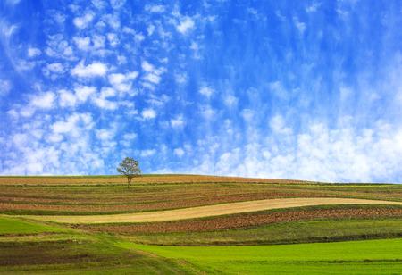 Lonley tree in the fields with a cloudscape Stok Fotoğraf