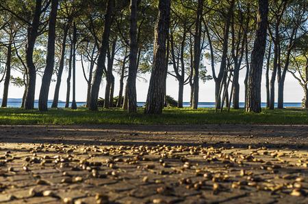Small park with trees near a mediterranean sea.