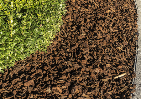 Small plant is  surrounded with wood chips Stok Fotoğraf - 120368557