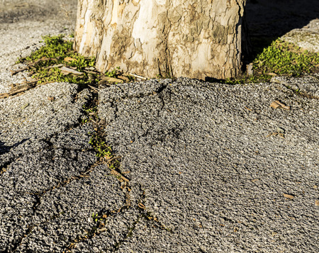 Tree is fighting with asphalt and has cracked it Stok Fotoğraf - 120368614