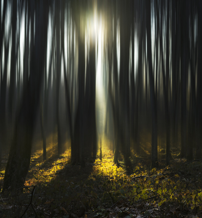 Abstract forest with beautiful sun light over it.