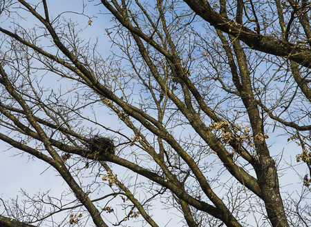 Small size bird nest on a tree in the winter time. Stok Fotoğraf - 120369142