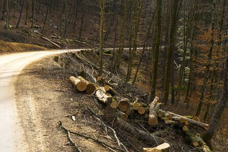 Trees cut down in the fores for making a car road.