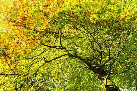 Under the tree in autumn season time 免版税图像