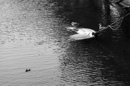 Two birds near a small sinken boat in a mediterranean sea.