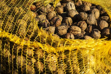 Wallnuts gathered in a yellow plastic mesh and drying on sun.