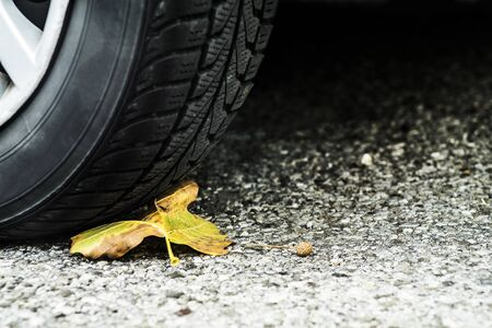 Car tire with a tree leaf underneath symbolizing transport industry against nature.