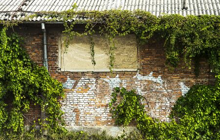 Abandoned building covered with plants and vegetation. 版權商用圖片