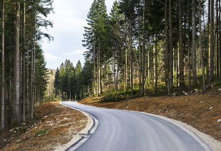 Newly constructed road leading through the forest area.