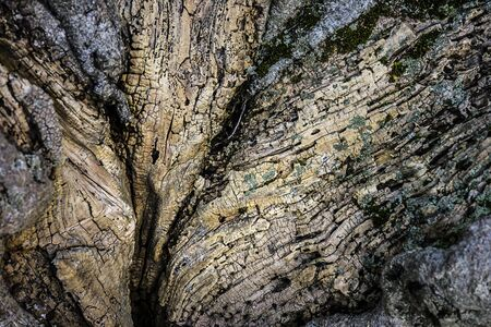 Very old rotten tree close up view 免版税图像