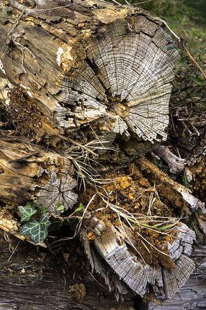 Wood in slowly decaying in the nature ground. 免版税图像 - 145008688