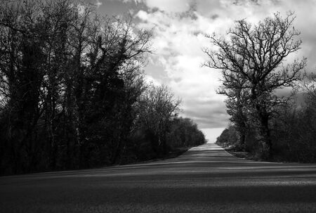 Dramatic empty road scene with trees.