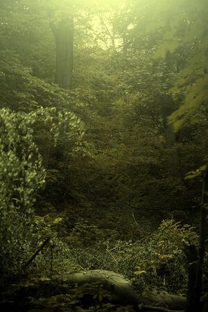 Vintage photo of autumn forest Standard-Bild