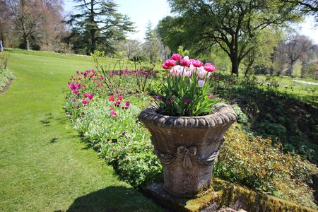 landscaped garden: Landscaped Garden with Tulips in an Urn Stock Photo