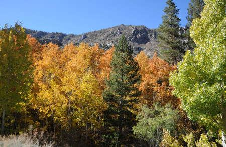 Fall Colors Stock Photo - 22635507