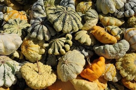 gourds Stock Photo - 23098912