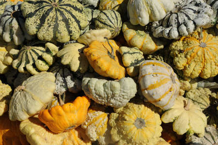 Gourds Stock Photo - 23098913