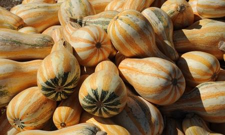 Yellow gourds Stock Photo - 23098914
