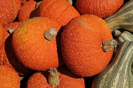 Rippled pumpkins Stock Photo - 22635535