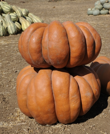Pumpkin Stock Photo - 22635536