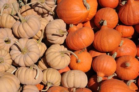 unusual pumpkins Stock Photo - 22635537